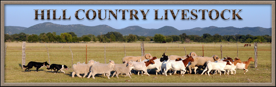 Hill Country Livestock
